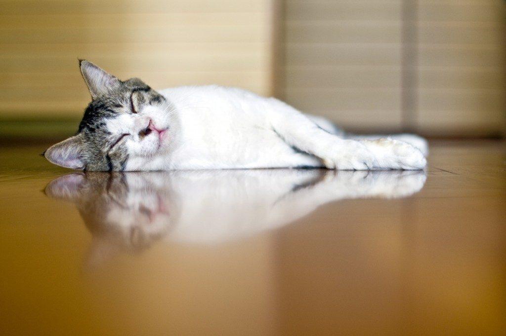 Cat in the floor