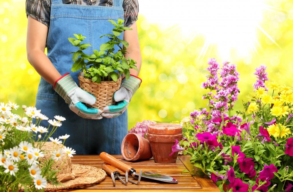 Gardener taking care of the plants