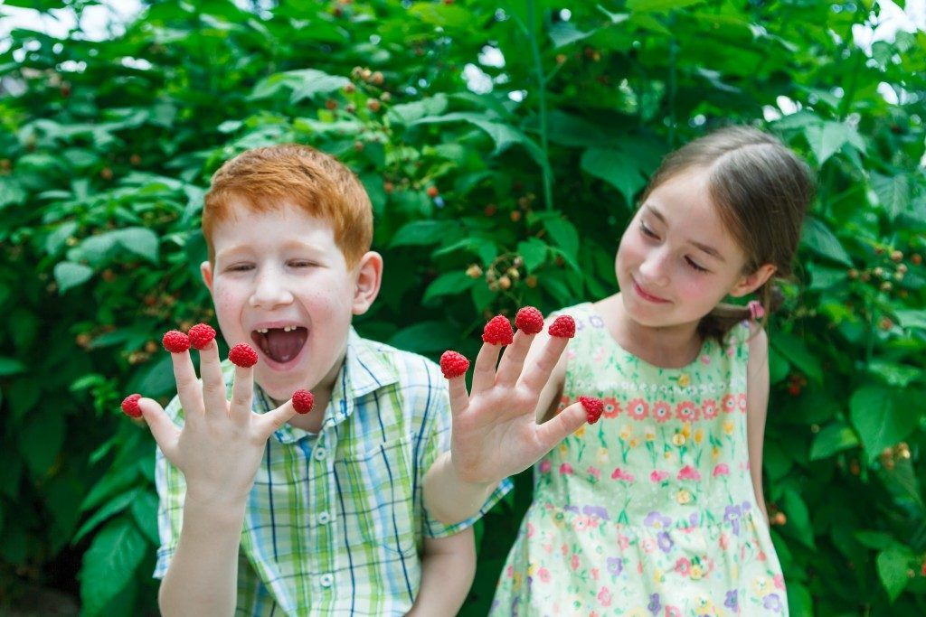 Children with raspberries on their fingers
