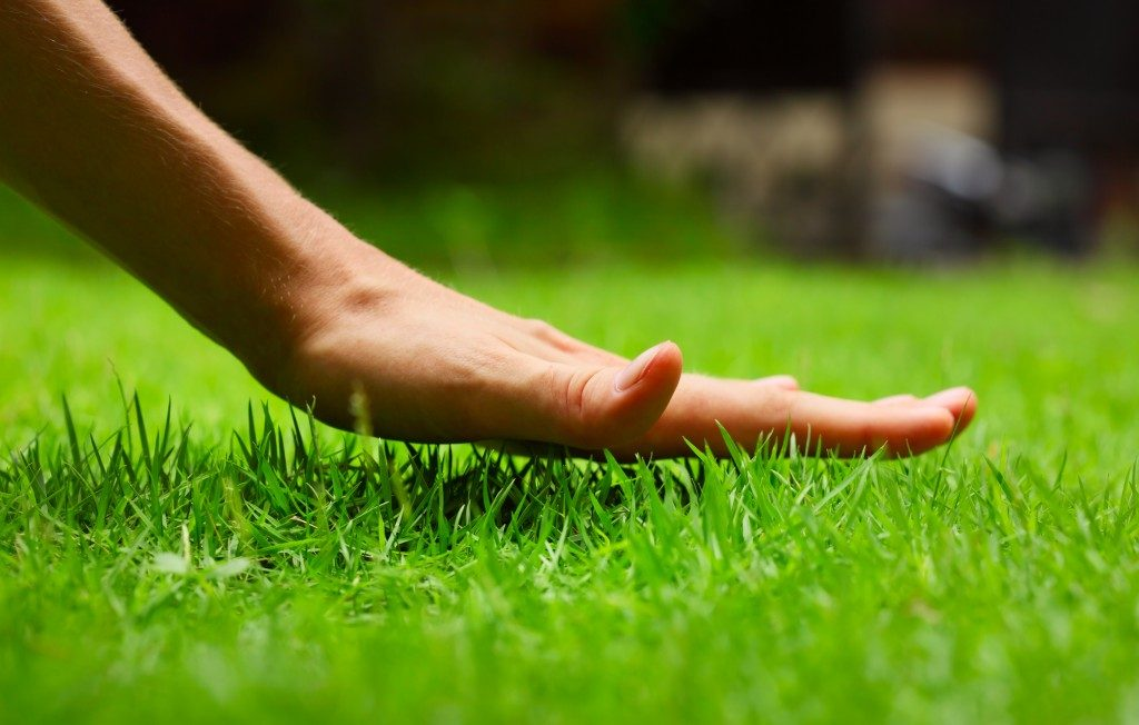 Hand on lawn