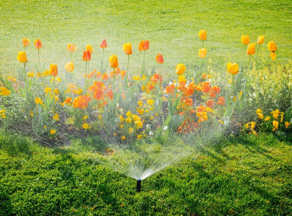 flowers in the garden being watered
