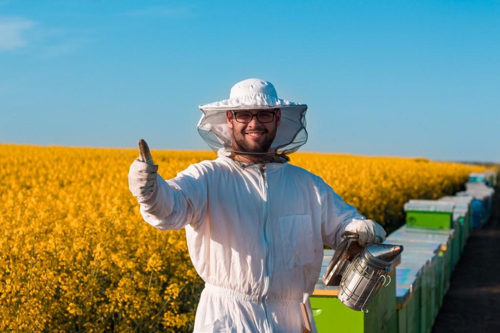 harvesting manuka honey