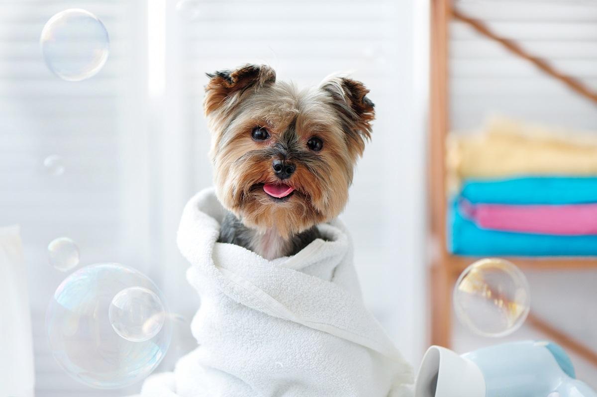 dog after bath time